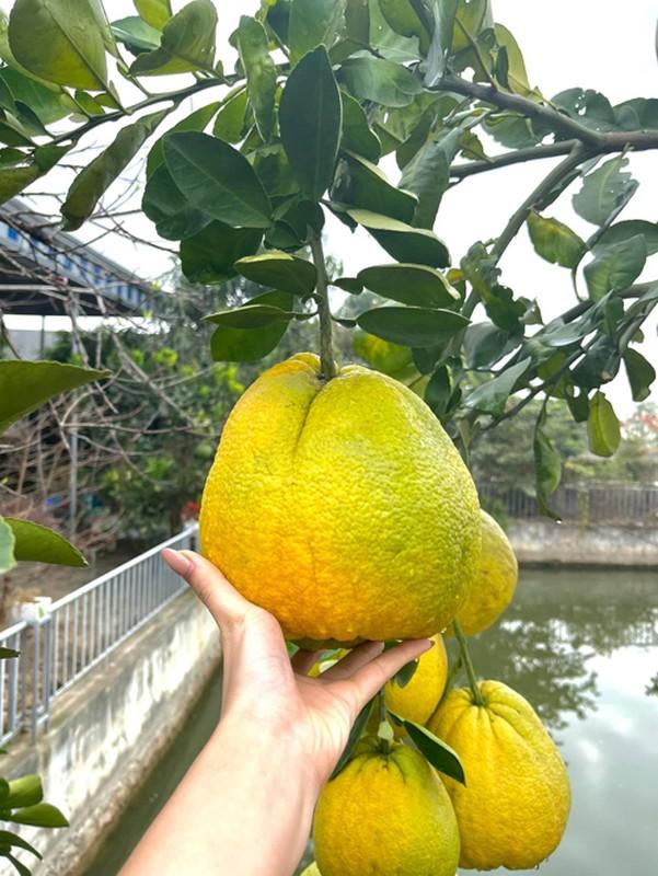 Vuon rau qua tot um trong nha Hoa hau Do Thi Ha-Hinh-4