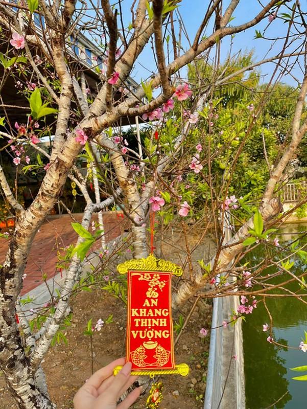 Vuon rau qua tot um trong nha Hoa hau Do Thi Ha-Hinh-7