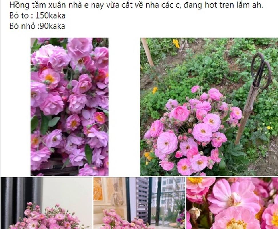"""Hoa dai o que moc day bo rao... len pho """"dat hang"""" muon mua cung kho-Hinh-3"""