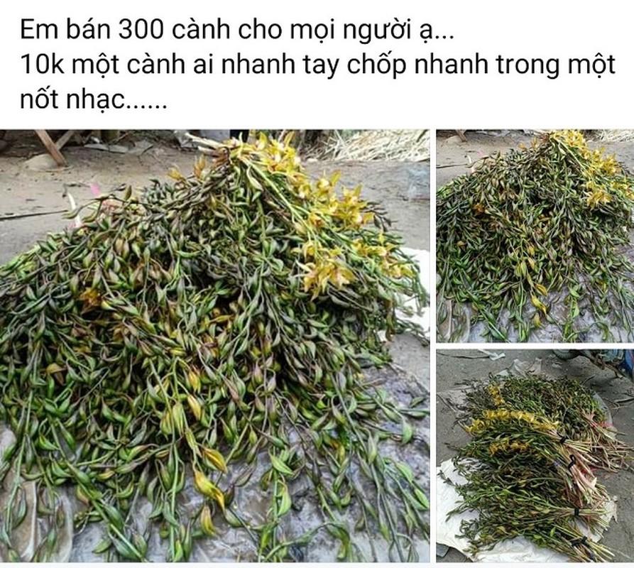 """Bat mi ve lan """"quy toc"""" truoc co tien cung kho mua... nay ban re nhu rau-Hinh-9"""