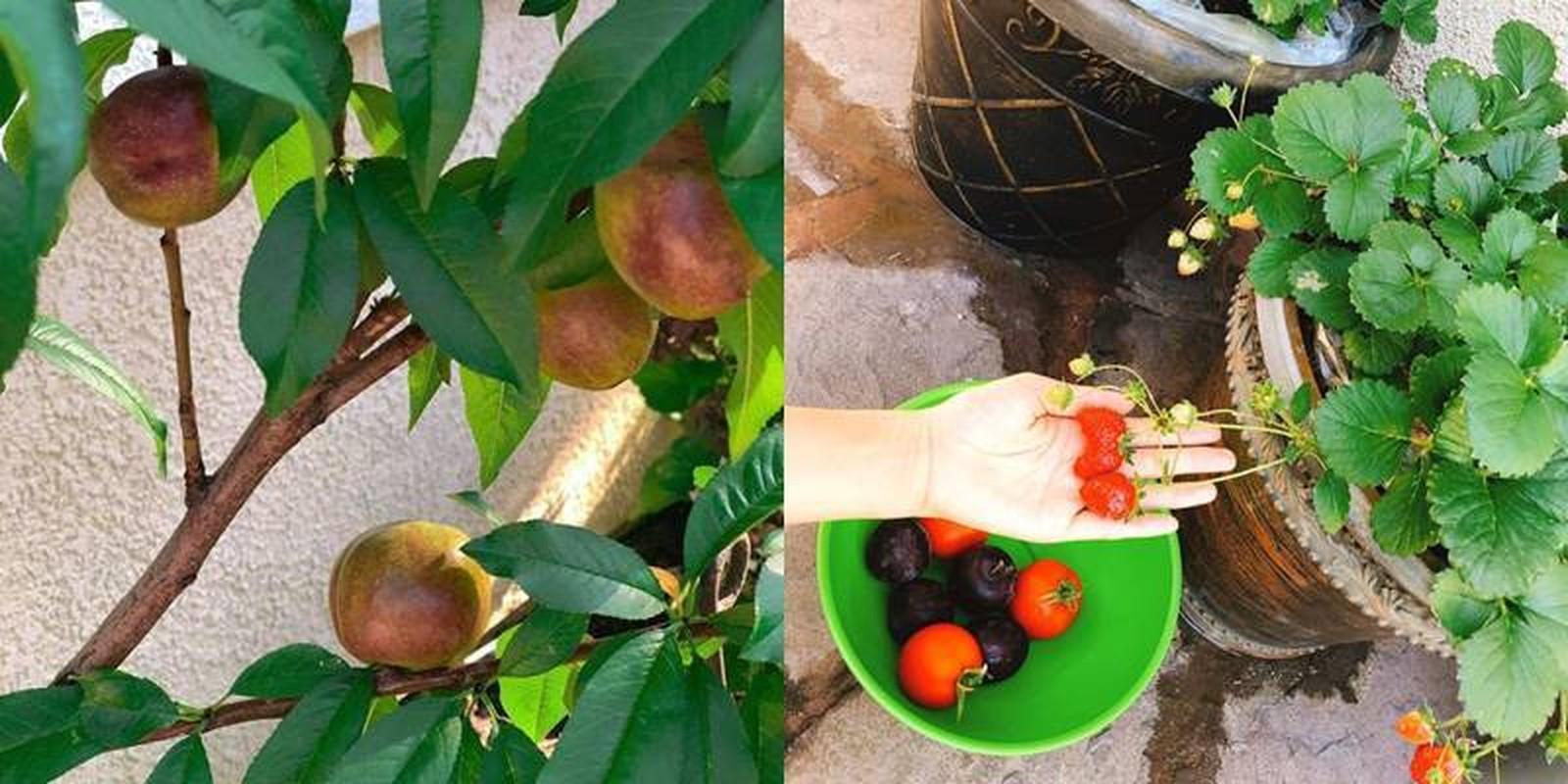 Man nhan vuon rau qua triu canh trong nha Hoa hau Viet o troi Tay-Hinh-4