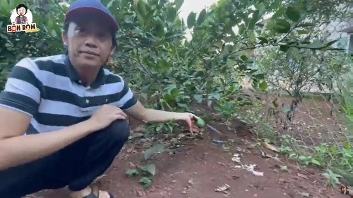 Khu vuon nghin m2 trong cay, nuoi ga cua Hoai Linh o Dong Nai-Hinh-3