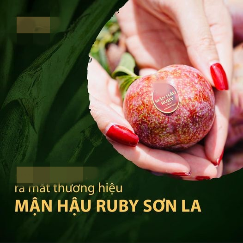 Man hau Ruby Son La vua ra mat ngon dac biet the nao?-Hinh-2