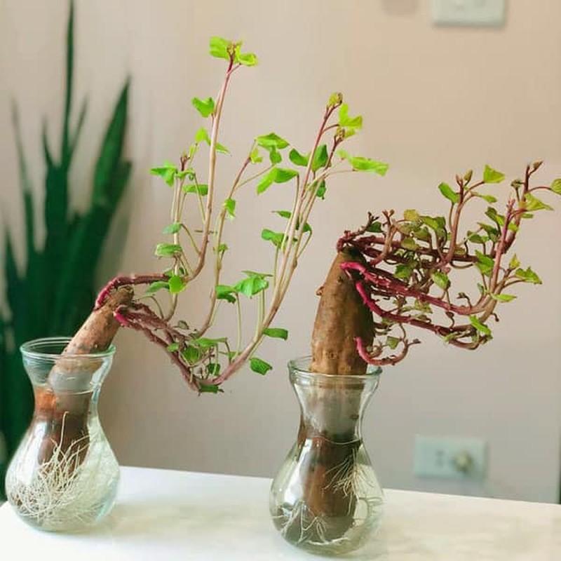 "Dep hut mat nhung chau bonsai ""lang dot bien"" dang gay sot-Hinh-4"