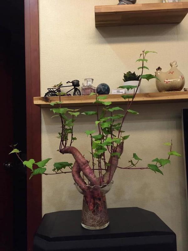 "Dep hut mat nhung chau bonsai ""lang dot bien"" dang gay sot-Hinh-6"