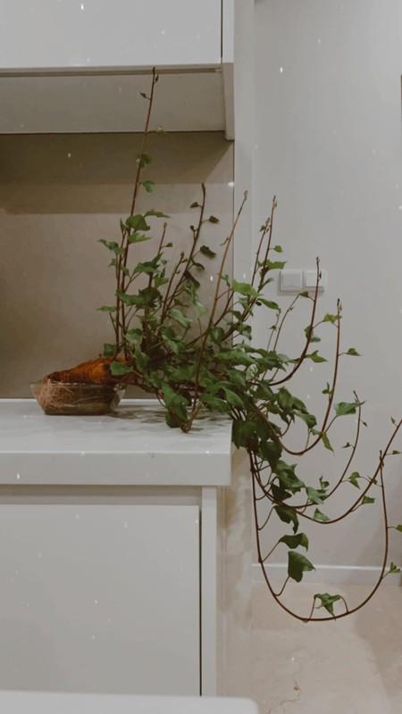 "Dep hut mat nhung chau bonsai ""lang dot bien"" dang gay sot"