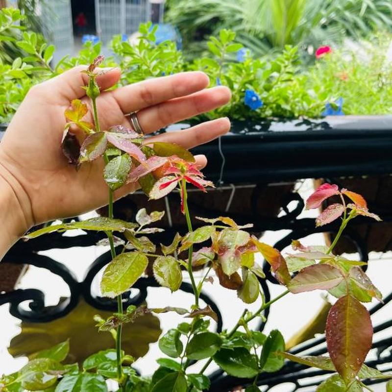 Ban cong xanh muot, ngap hoa trong nha mat pho cua Ho Bich Tram-Hinh-3