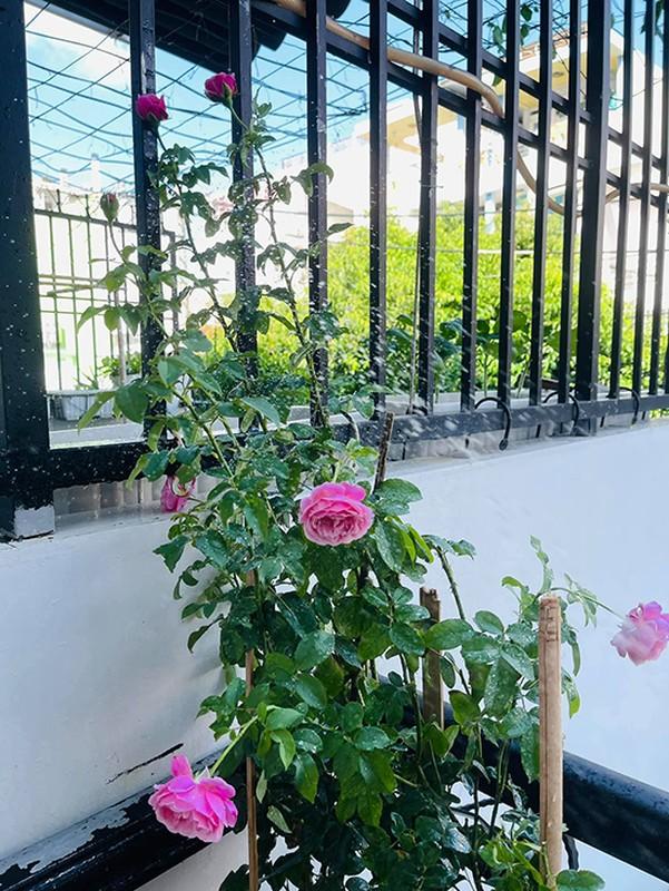 Ban cong xanh muot, ngap hoa trong nha mat pho cua Ho Bich Tram-Hinh-6