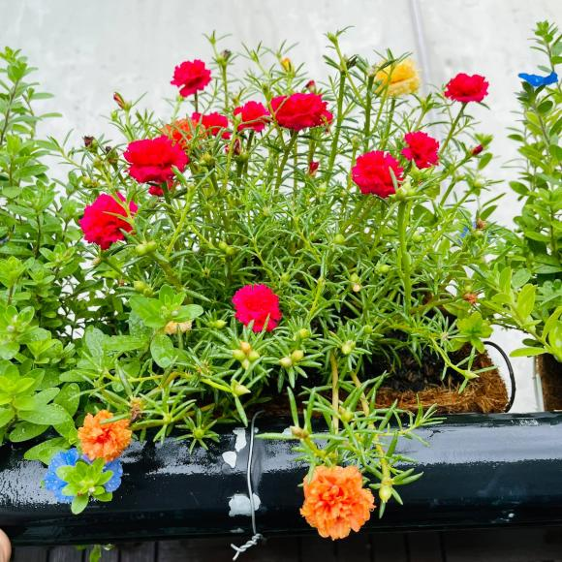 Ban cong xanh muot, ngap hoa trong nha mat pho cua Ho Bich Tram-Hinh-7