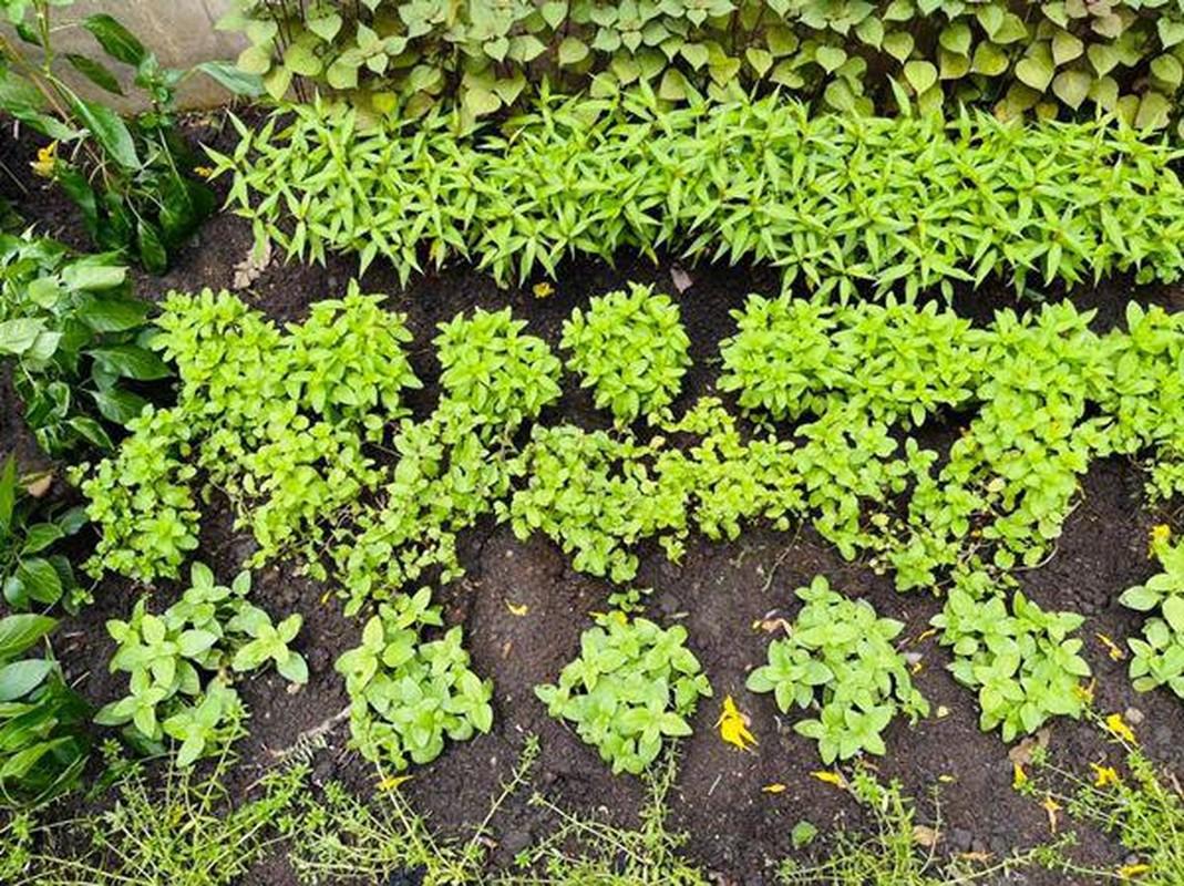 Man nhan vuon rau xanh muot trong biet thu 60 ty cua Dam Vinh Hung-Hinh-4