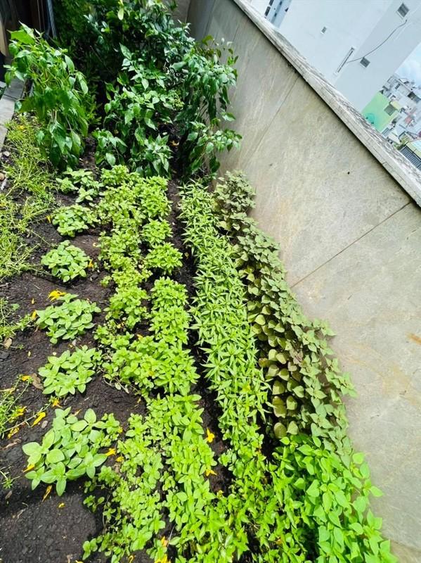 Man nhan vuon rau xanh muot trong biet thu 60 ty cua Dam Vinh Hung-Hinh-5
