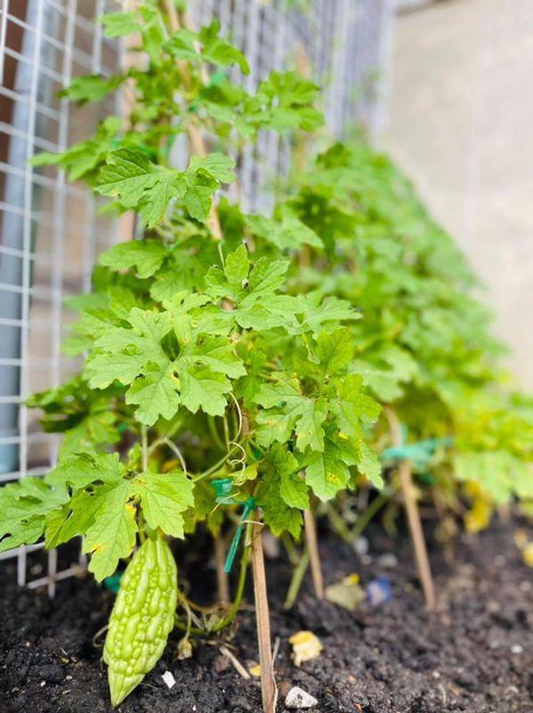Man nhan vuon rau xanh muot trong biet thu 60 ty cua Dam Vinh Hung-Hinh-8