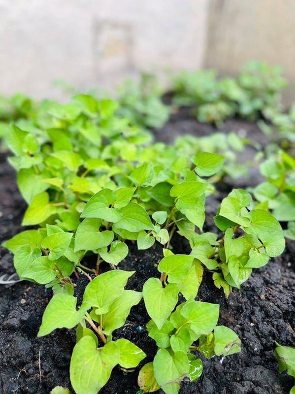Man nhan vuon rau xanh muot trong biet thu 60 ty cua Dam Vinh Hung-Hinh-9