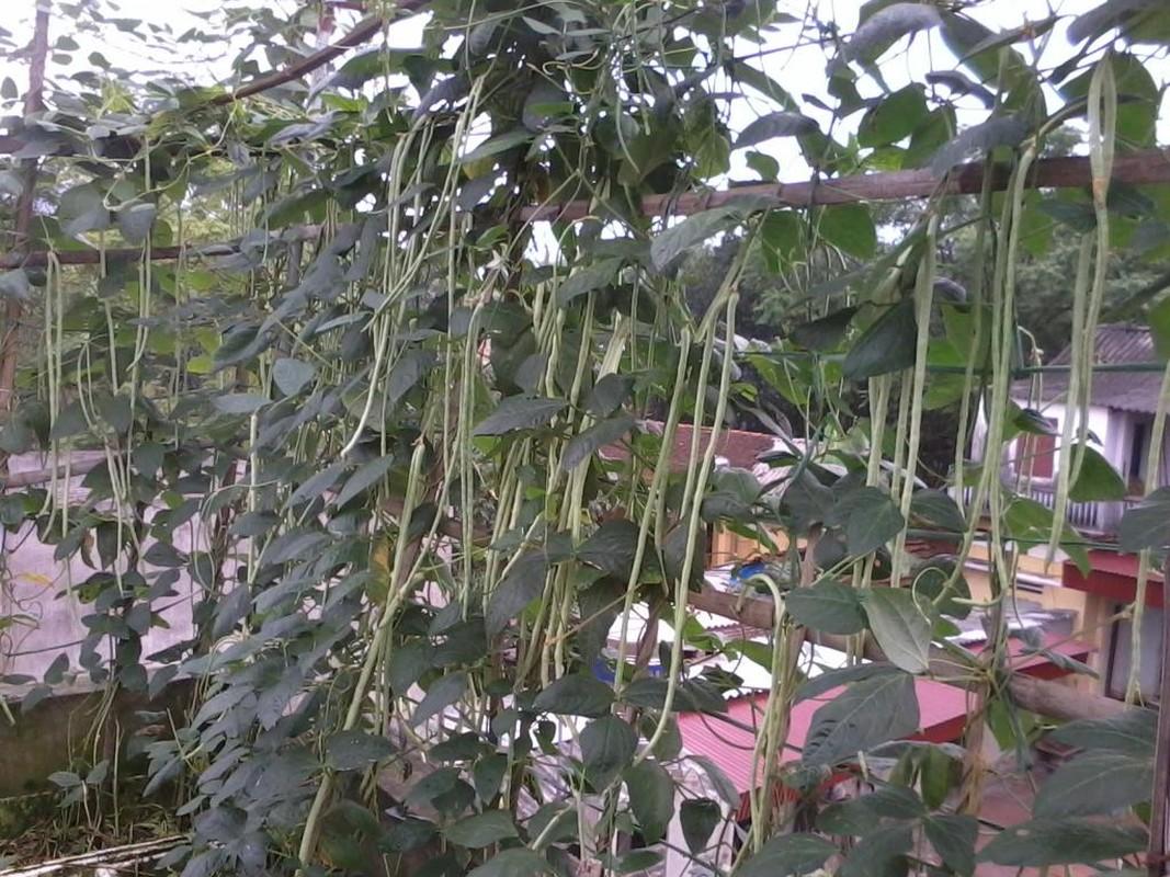 7 loai rau trong ban cong len vun vut mua thu-Hinh-10
