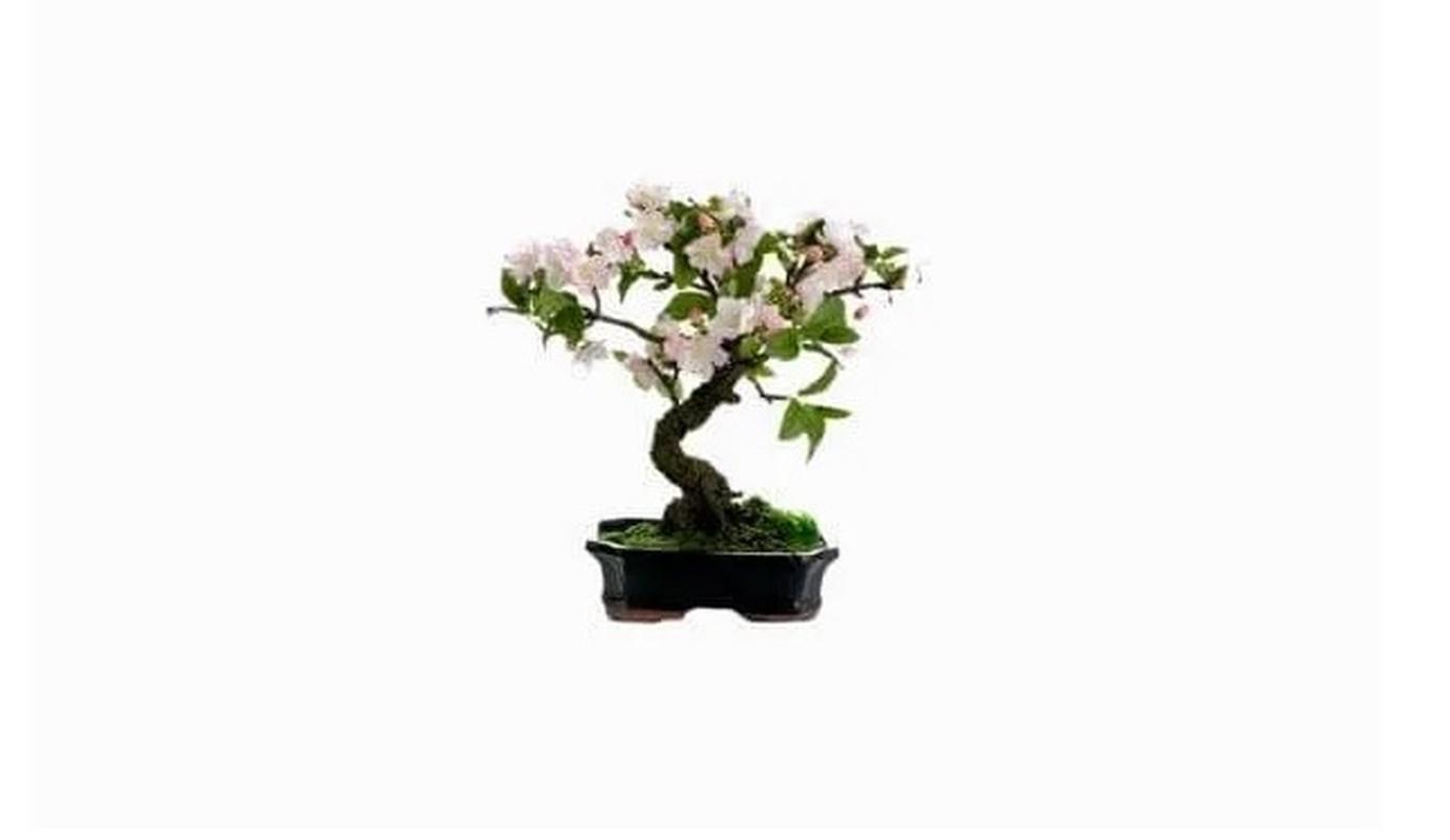 Man nhan loat sieu pham bonsai nha giau co tien cung kho mua-Hinh-10