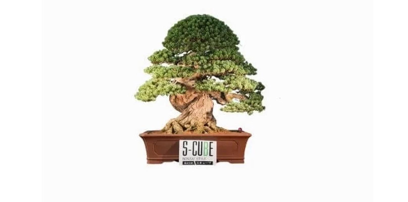 Man nhan loat sieu pham bonsai nha giau co tien cung kho mua-Hinh-2