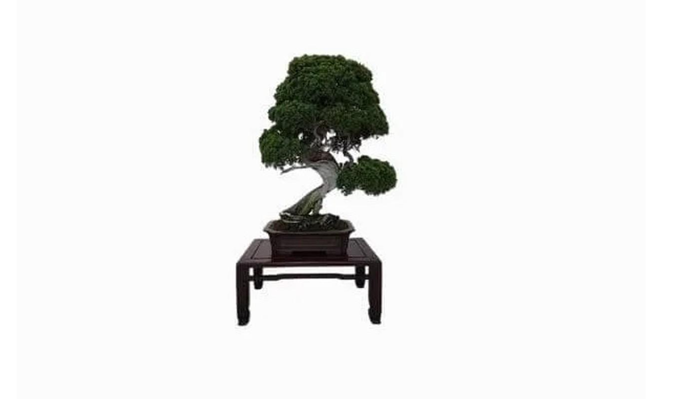Man nhan loat sieu pham bonsai nha giau co tien cung kho mua-Hinh-3