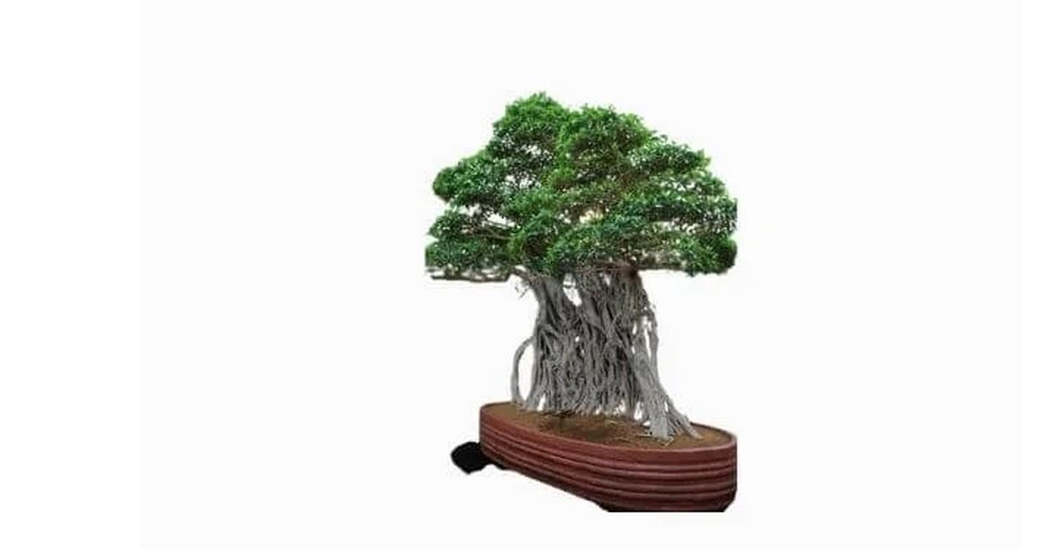 Man nhan loat sieu pham bonsai nha giau co tien cung kho mua-Hinh-4