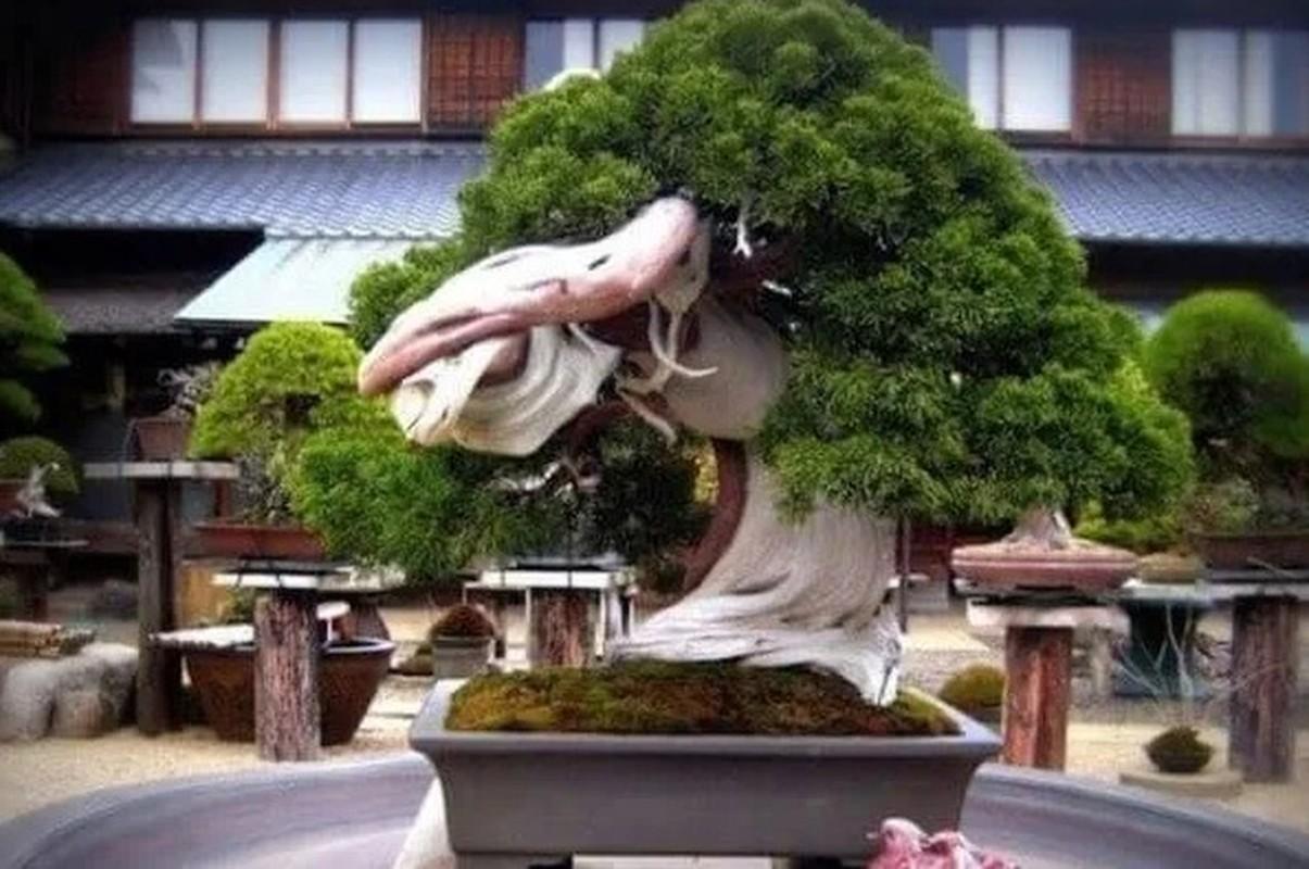 Man nhan loat sieu pham bonsai nha giau co tien cung kho mua-Hinh-5