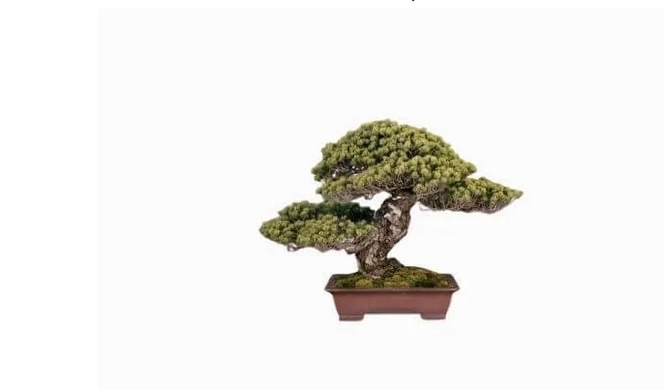 Man nhan loat sieu pham bonsai nha giau co tien cung kho mua-Hinh-6