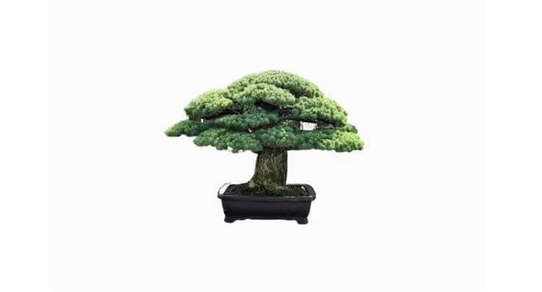 Man nhan loat sieu pham bonsai nha giau co tien cung kho mua-Hinh-7