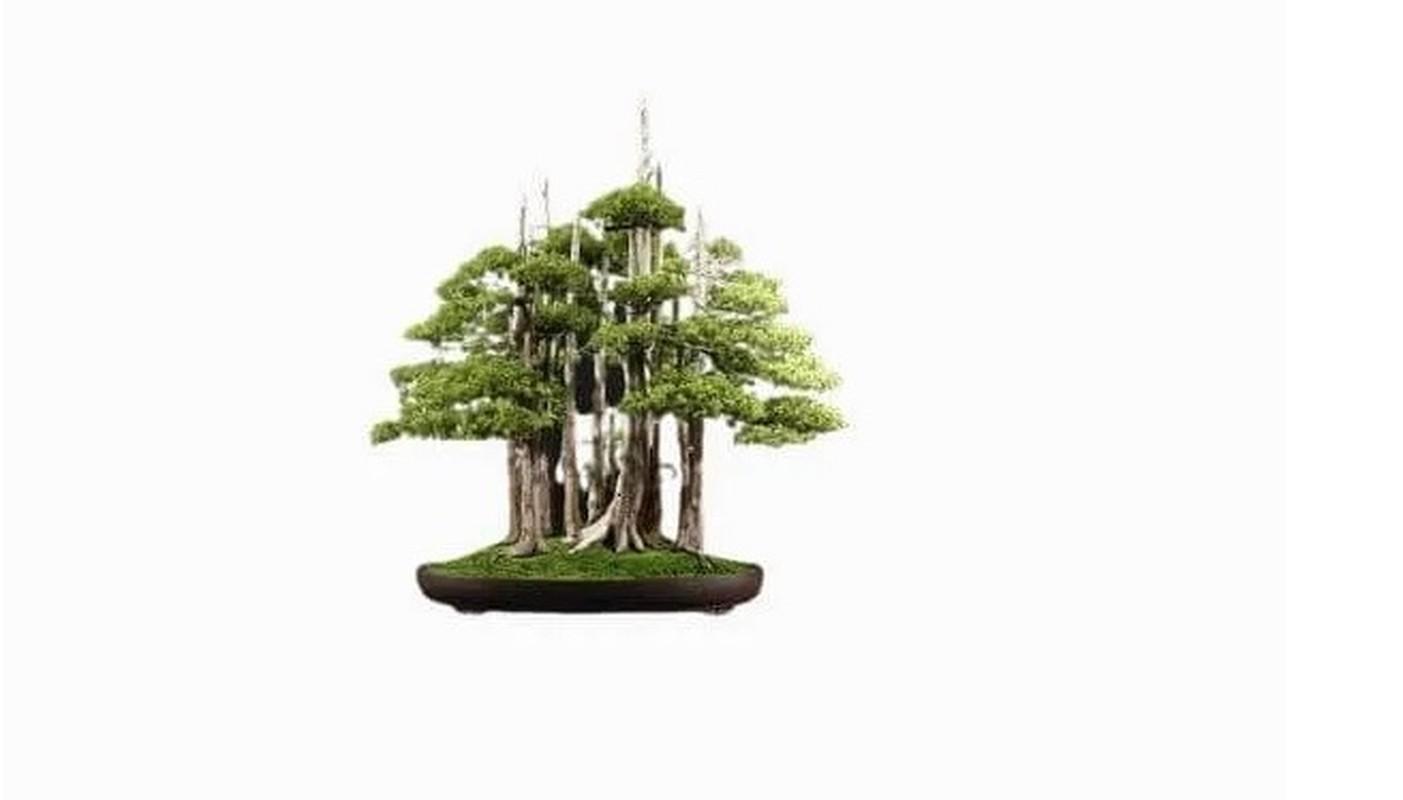 Man nhan loat sieu pham bonsai nha giau co tien cung kho mua-Hinh-8