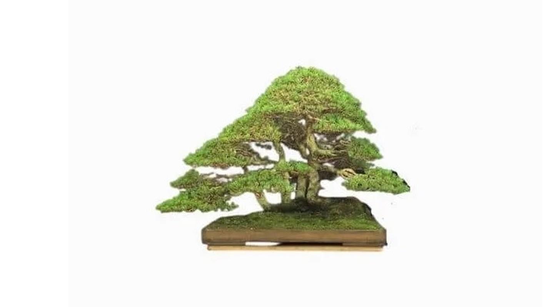 Man nhan loat sieu pham bonsai nha giau co tien cung kho mua-Hinh-9