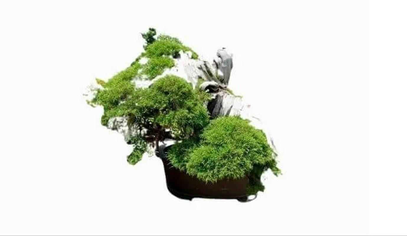 Man nhan loat sieu pham bonsai nha giau co tien cung kho mua