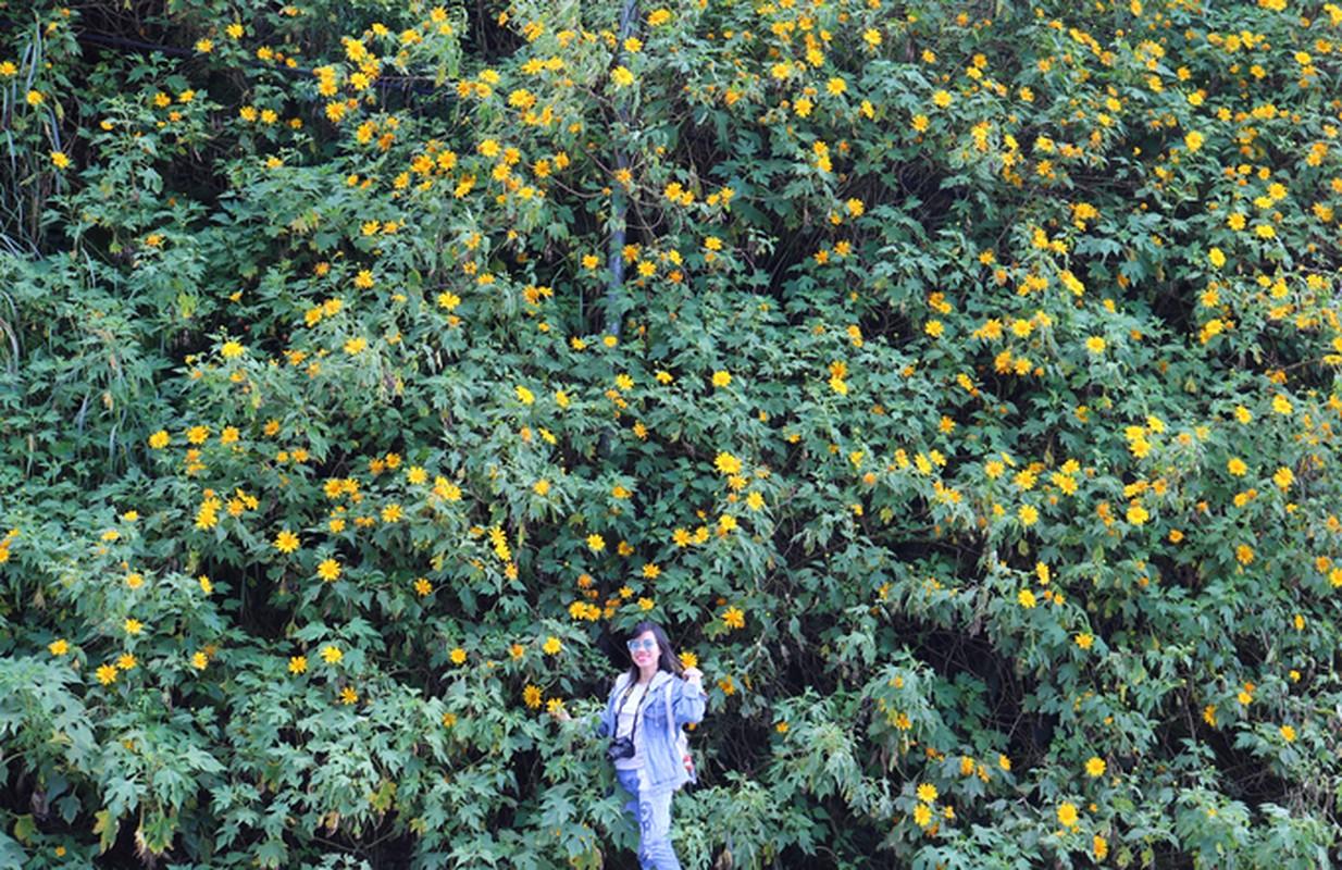 Sac hoa da quy vang ruc phu khap cac cung duong Da Lat-Hinh-3