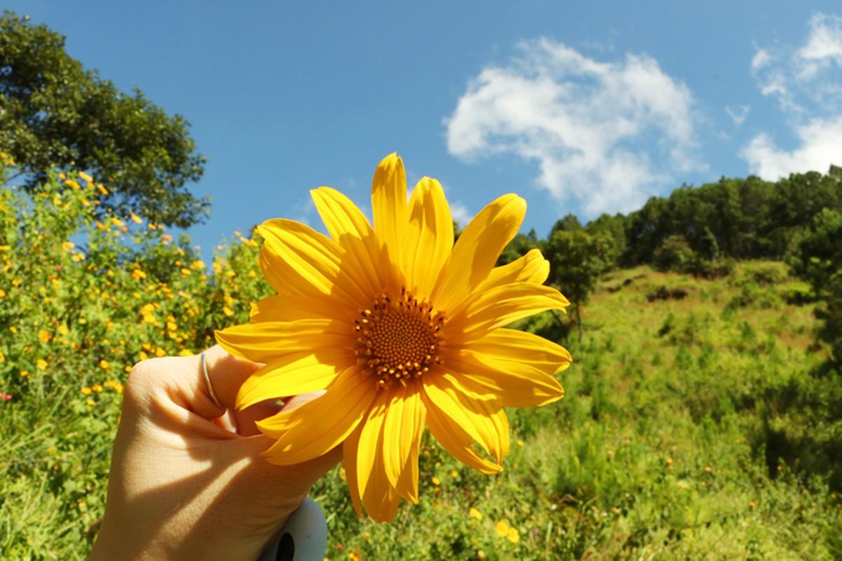 Sac hoa da quy vang ruc phu khap cac cung duong Da Lat-Hinh-5