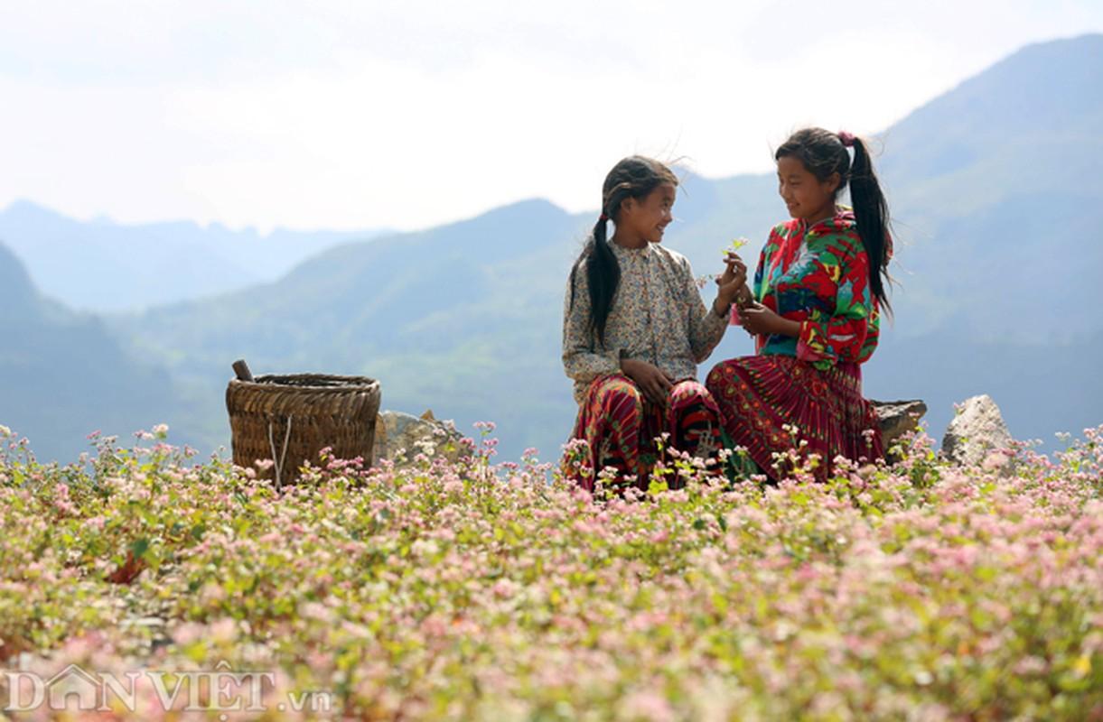 Anh: Me man nhung doi hoa tam giac mach o Ha Giang-Hinh-4