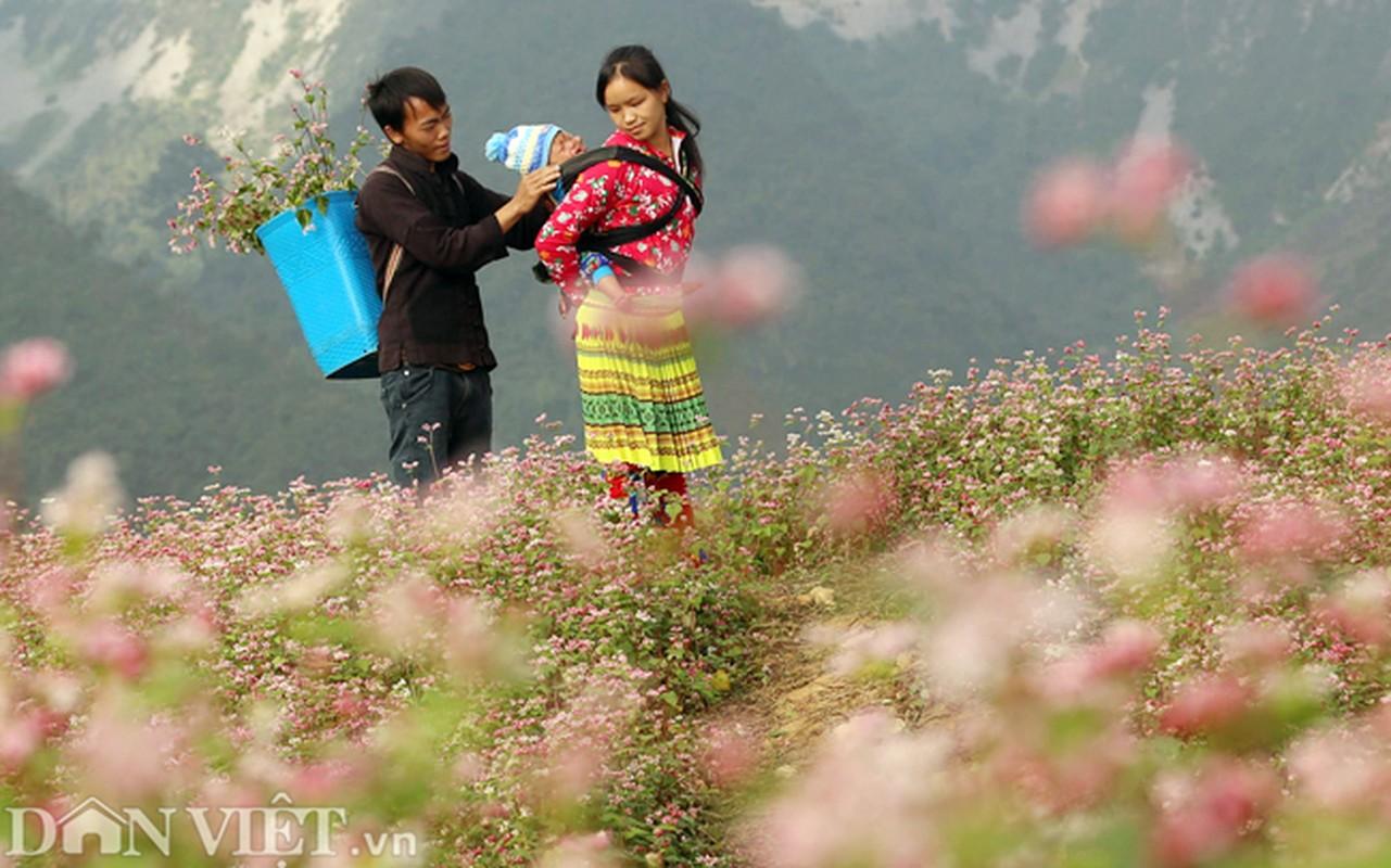 Anh: Me man nhung doi hoa tam giac mach o Ha Giang-Hinh-7