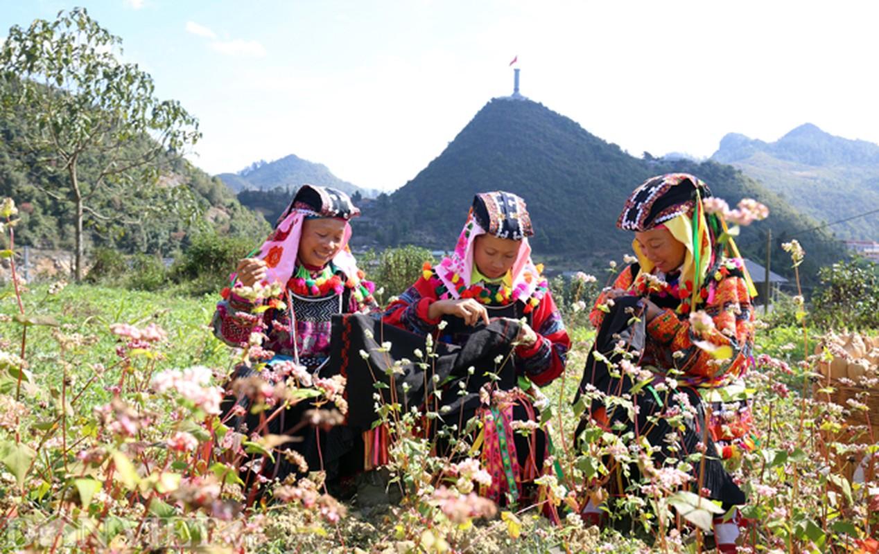 Anh: Me man nhung doi hoa tam giac mach o Ha Giang-Hinh-9