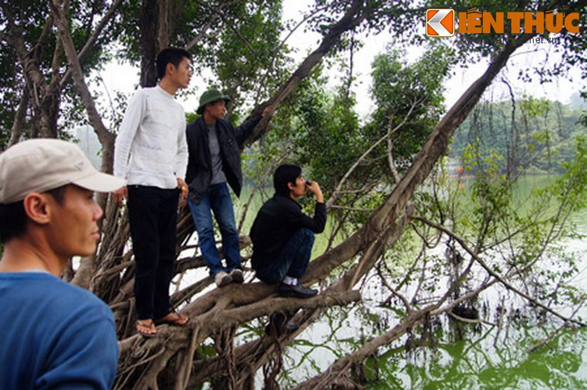 1.001 kieu xem cu Rua Ho Guom noi o Ha Noi-Hinh-19