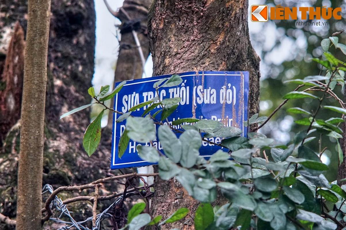 "Chiem nguong ""kho bau sua do nghin ti"" o Ha Noi-Hinh-4"