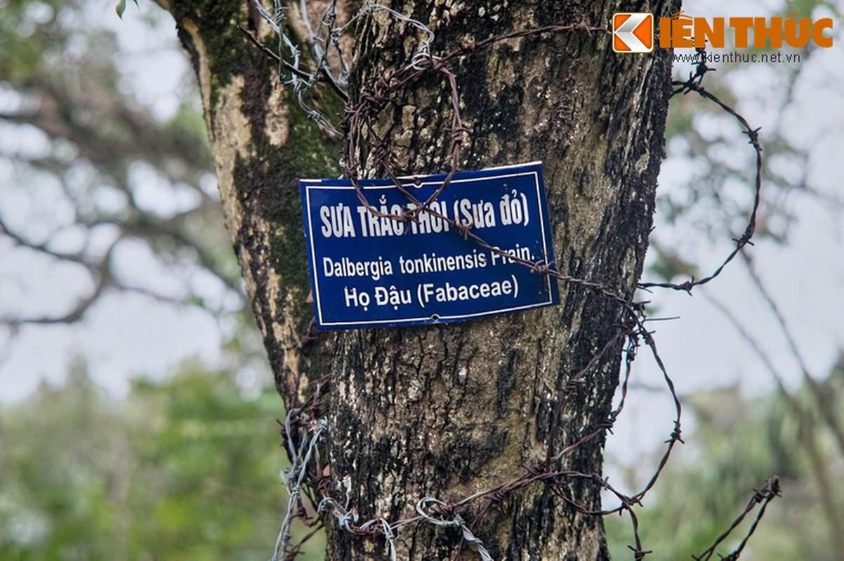 "Chiem nguong ""kho bau sua do nghin ti"" o Ha Noi-Hinh-6"