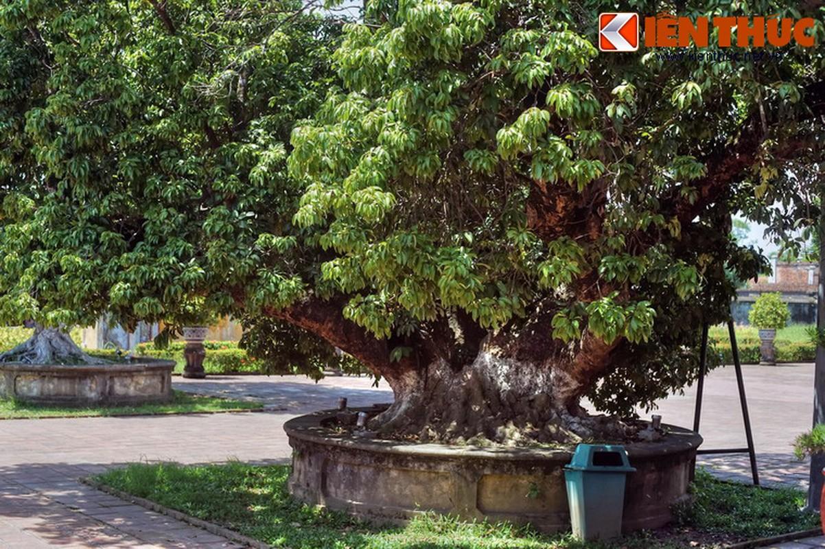 Ngam cung dien cuc dep cua cac Hoang thai hau nha Nguyen-Hinh-31