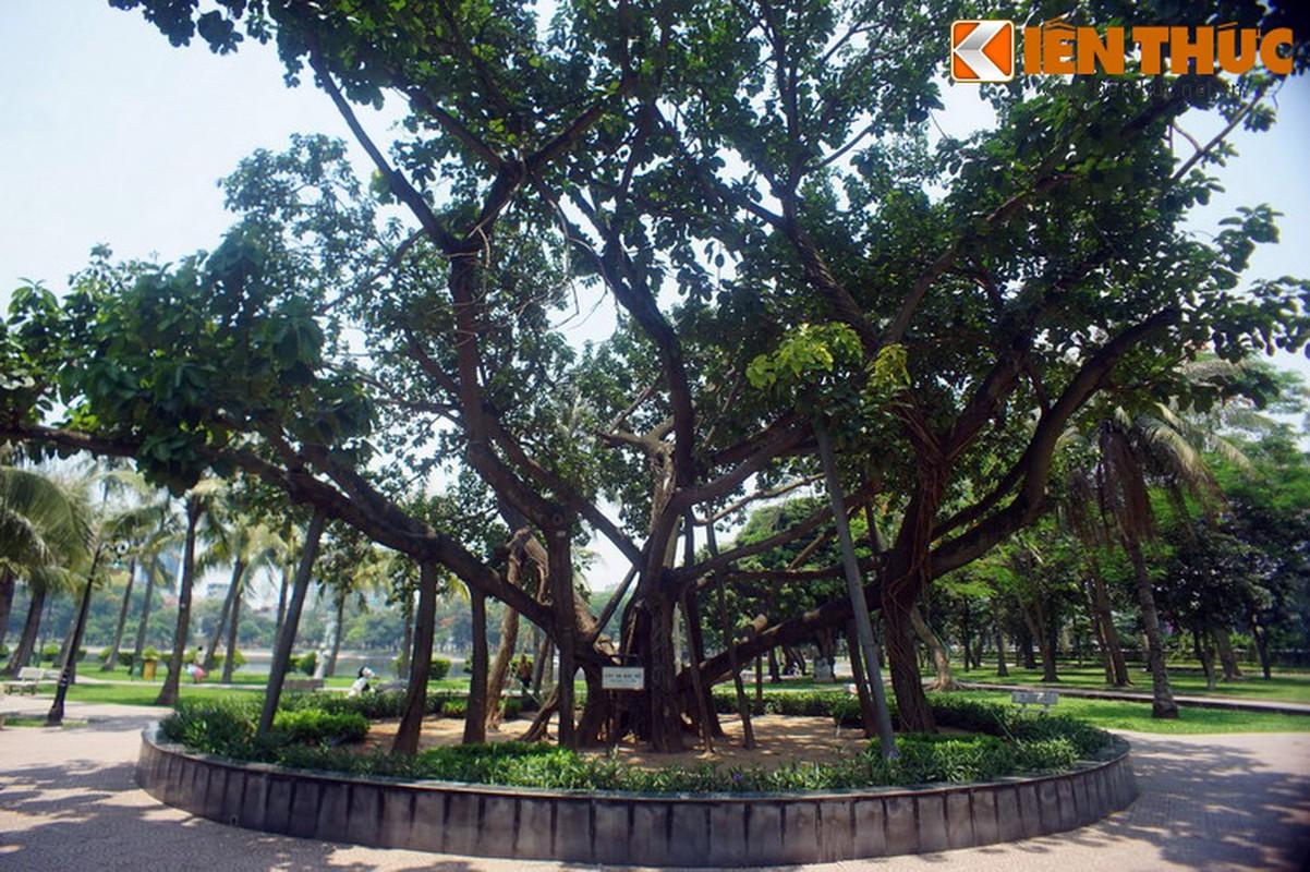 Tham cay da Bac Ho trong giua Thu do Ha Noi-Hinh-3