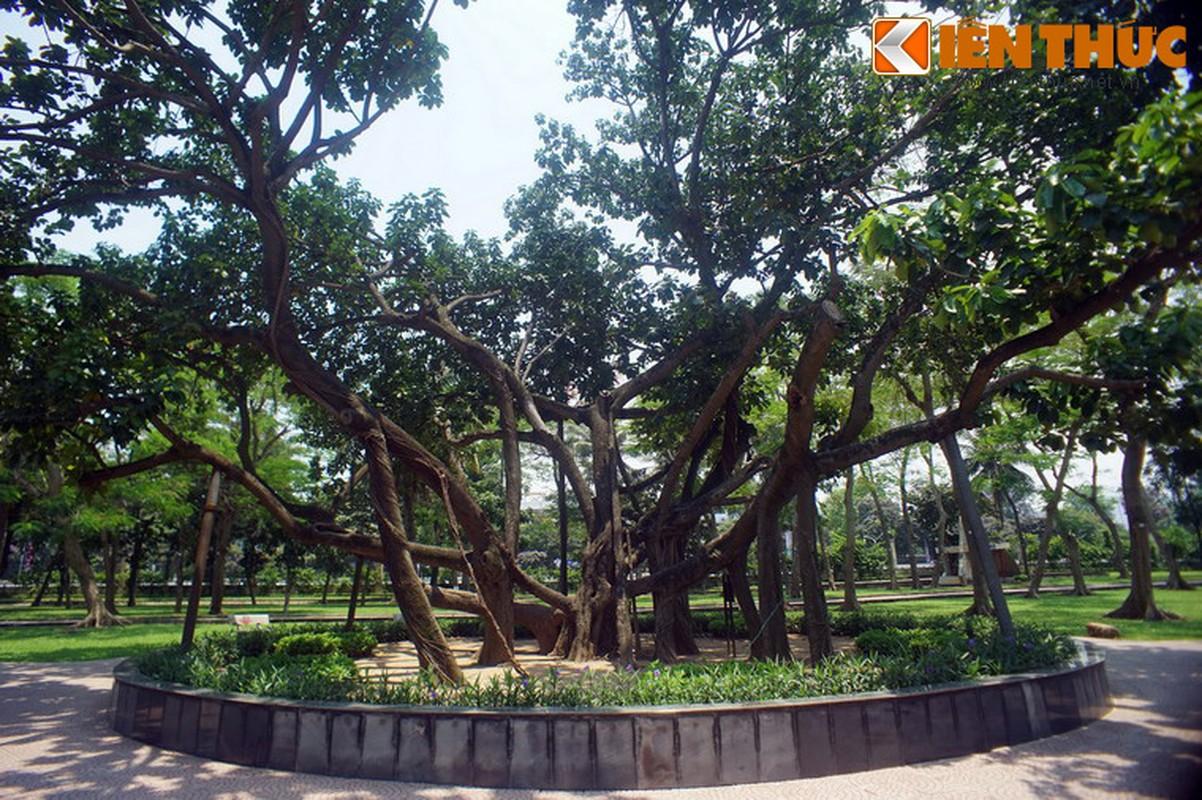 Tham cay da Bac Ho trong giua Thu do Ha Noi-Hinh-9