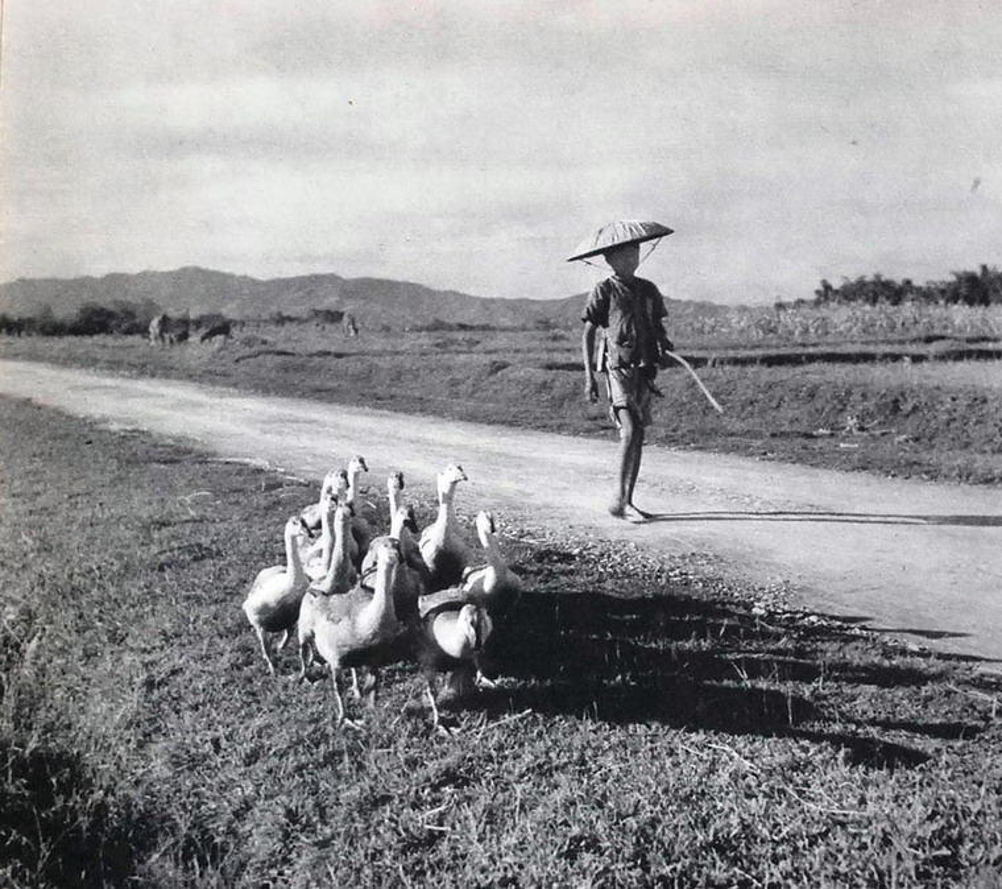 Anh chan dung tuyet dep cua nguoi Viet Nam nam 1951-Hinh-12