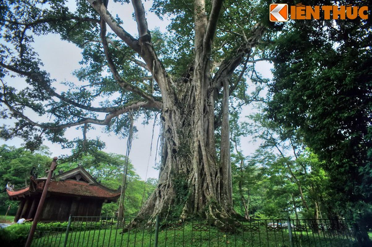 Dieu dac biet o Co do Lam Kinh - kinh do thu hai nha Hau Le-Hinh-13