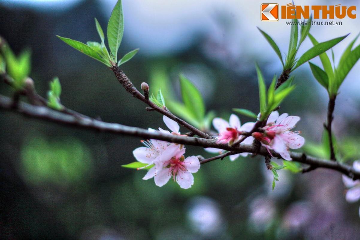 Lang nguoi truoc ve dep nguyen so cua Mai Chau, Hoa Binh-Hinh-11