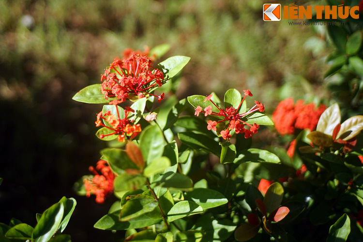 Truyen thuyet huyen ao hut hon nguoi ve hoa mau don-Hinh-2