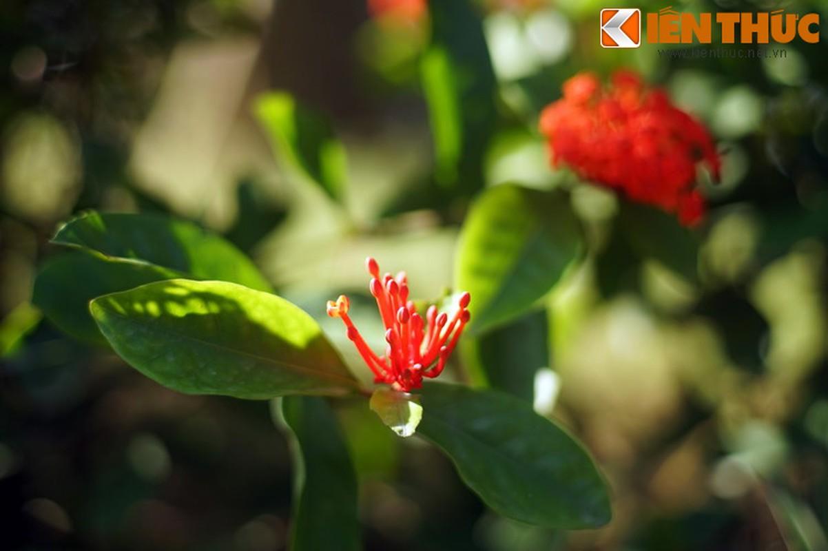 Truyen thuyet huyen ao hut hon nguoi ve hoa mau don-Hinh-3