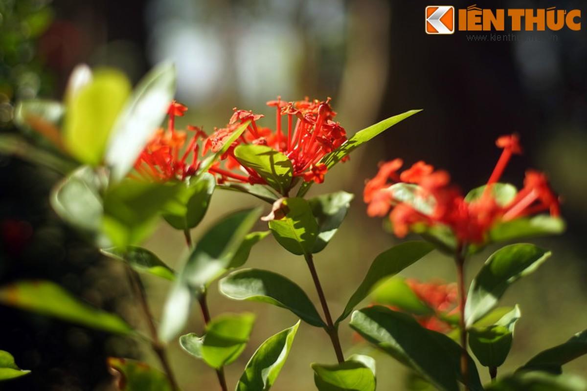 Truyen thuyet huyen ao hut hon nguoi ve hoa mau don-Hinh-4