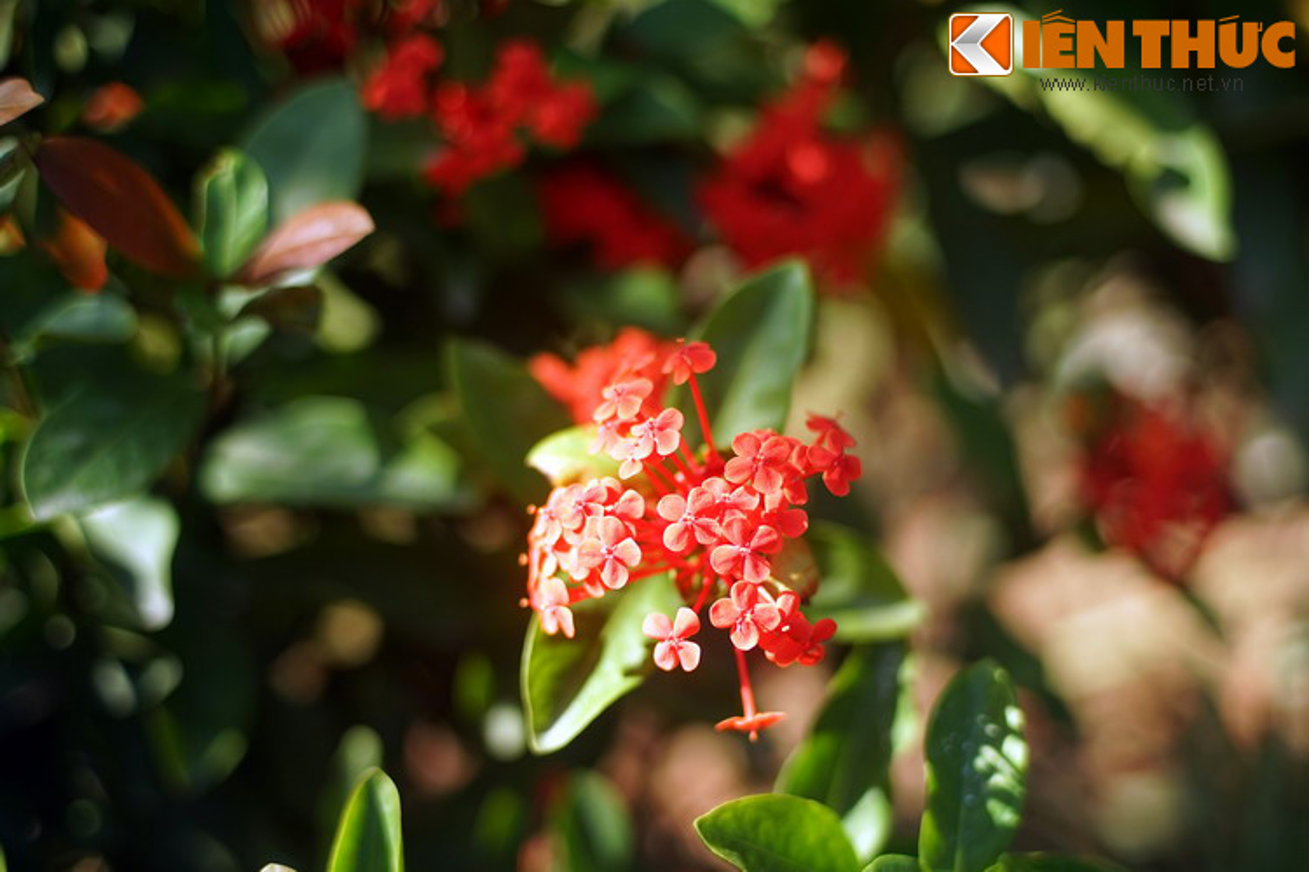 Truyen thuyet huyen ao hut hon nguoi ve hoa mau don-Hinh-5