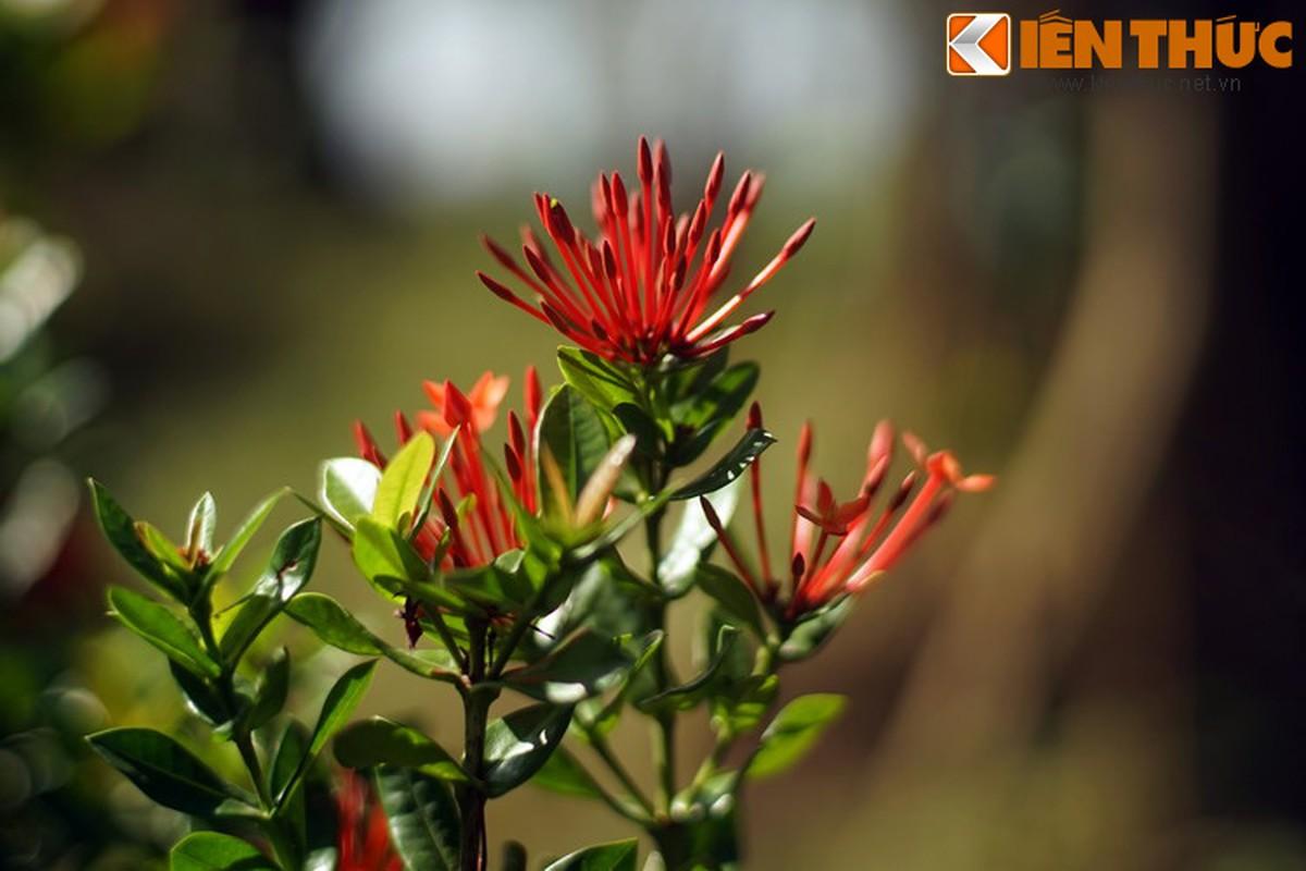 Truyen thuyet huyen ao hut hon nguoi ve hoa mau don-Hinh-6