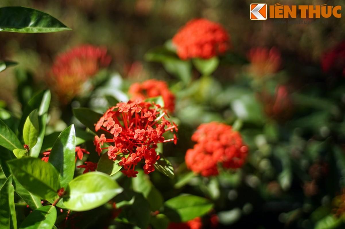 Truyen thuyet huyen ao hut hon nguoi ve hoa mau don-Hinh-7