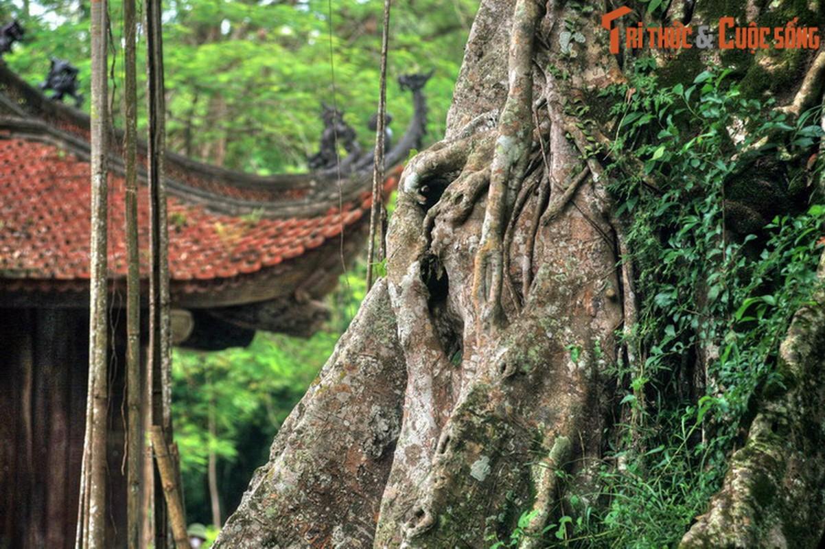 Bat ngo lich su gan 1.000 nam cua ten goi Thanh Hoa-Hinh-5