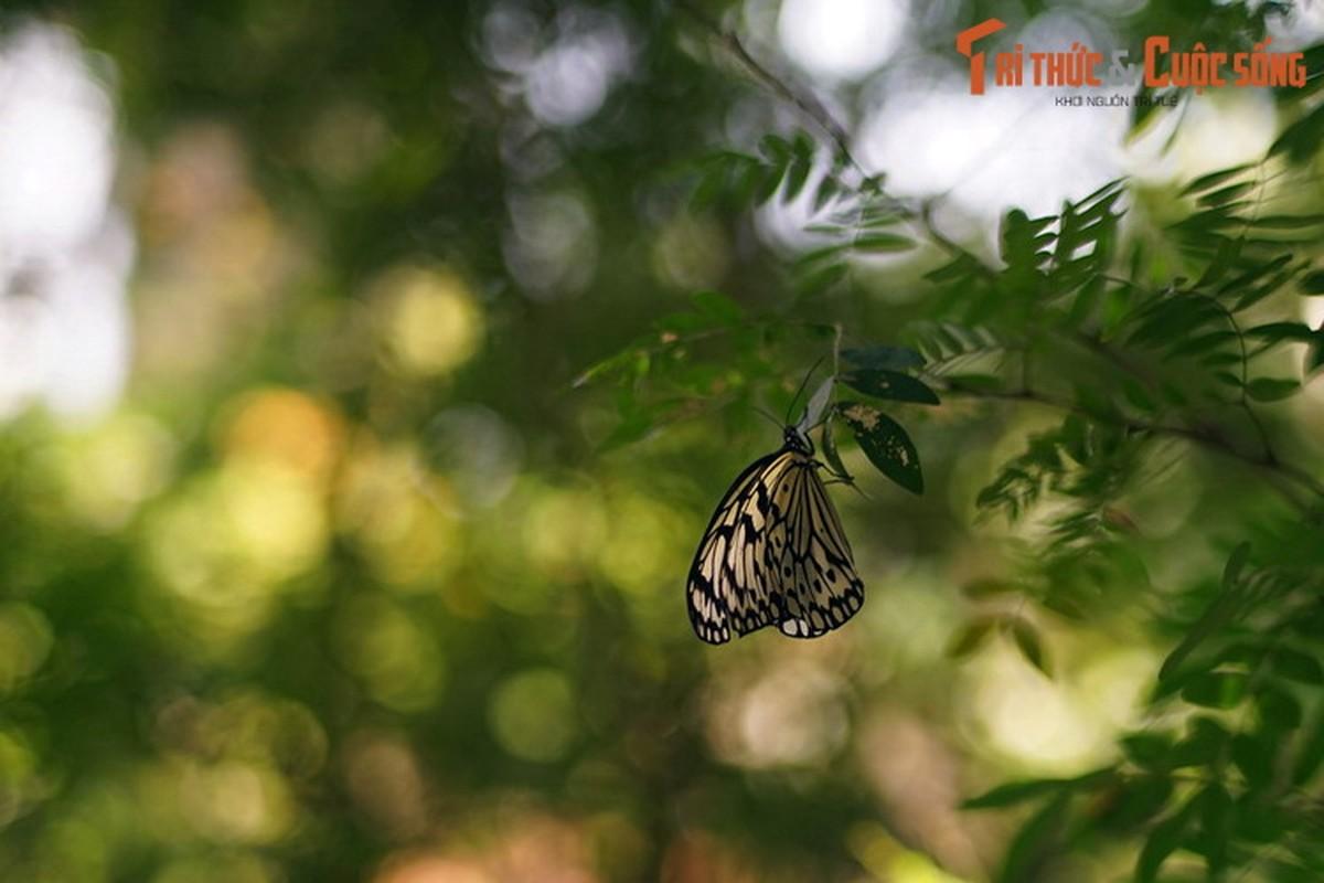 Lac loi trong trang trai buom noi tieng the gioi cua Malaysia-Hinh-4